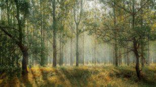 Universem participe à la reforestation